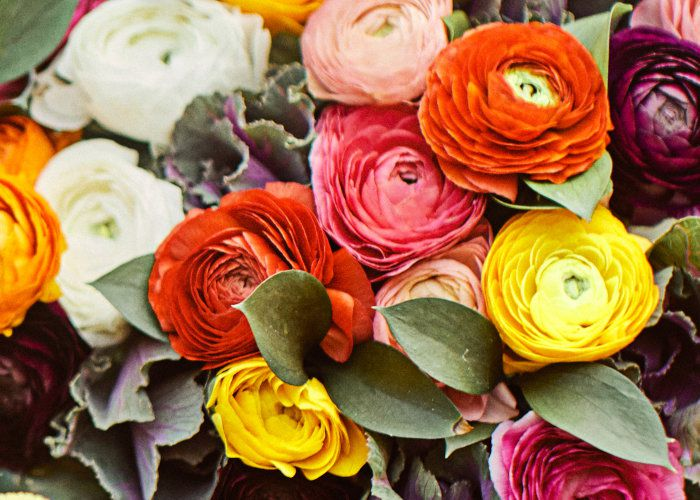 Ranunculus Care
