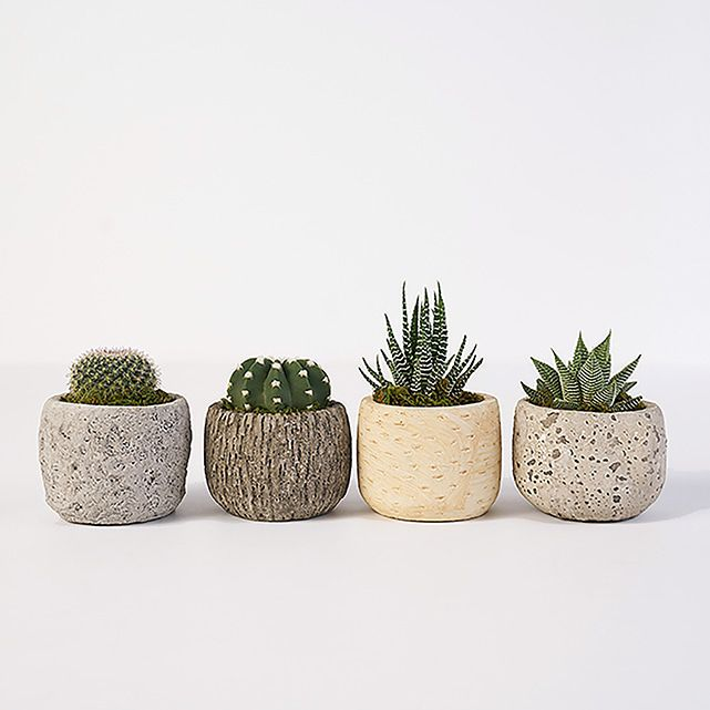 Four Succulents In Rustic Planters The Bouqs Co