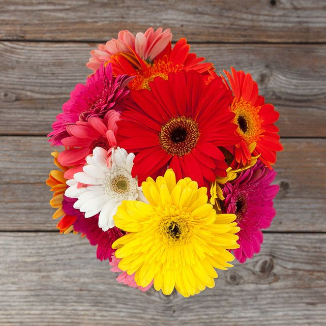 colorful mix of gerbera daisies 1