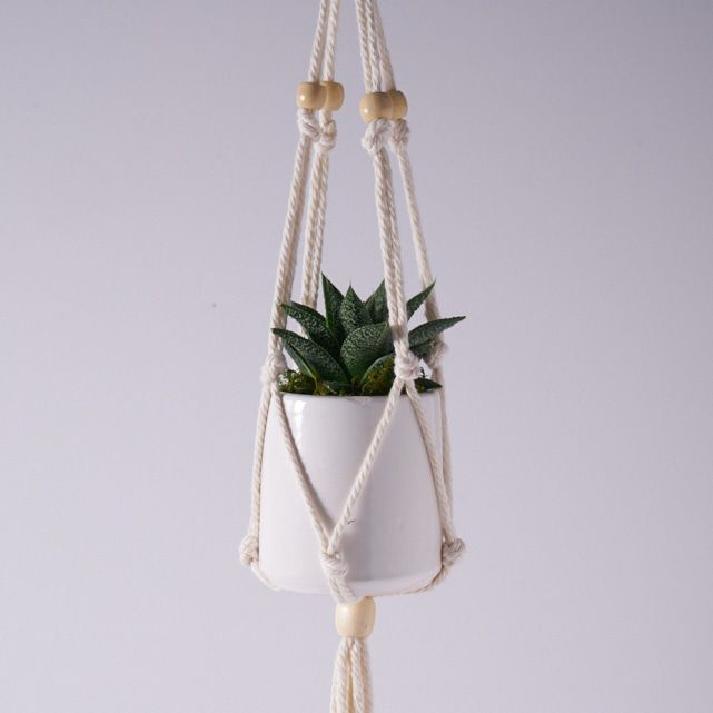 zebra succulent plant in white macrame hanging planter pot 2