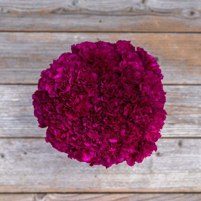 magenta carnation floral arrangement 1