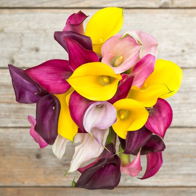 yellow, purple and pink calla lilies 1