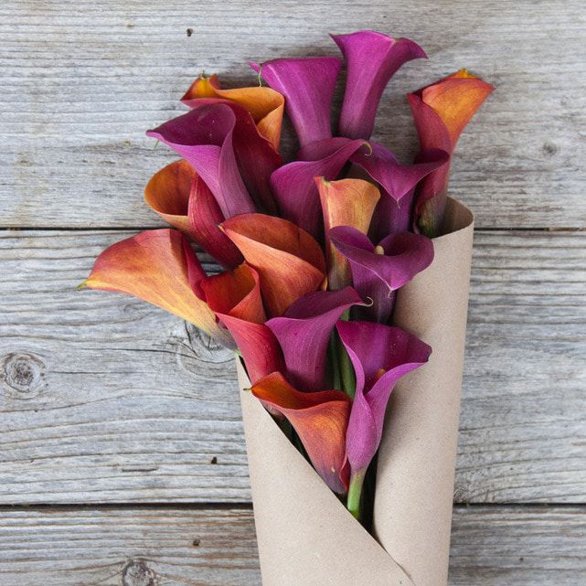 purple and yellow calla lily mix 4