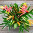 exotic orange and pink heliconia flowers with palm accents 4