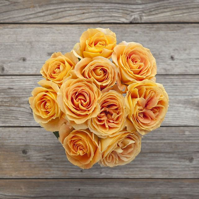 Peach Garden Rose peachy keen | peach garden rose bouquet - bouqs