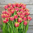 yellow and red striped tulip bouquet 4