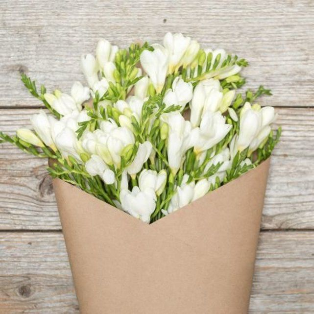 white freesia 5