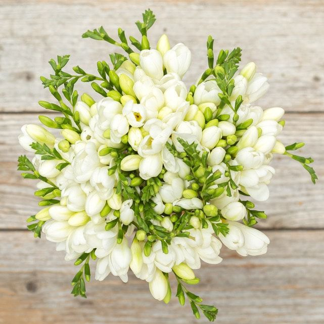 white freesia 3