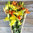 yellow and orange asiatic lilies  5